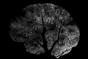 shrinking your brain